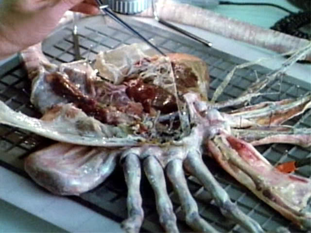 Face Hugger Dissected